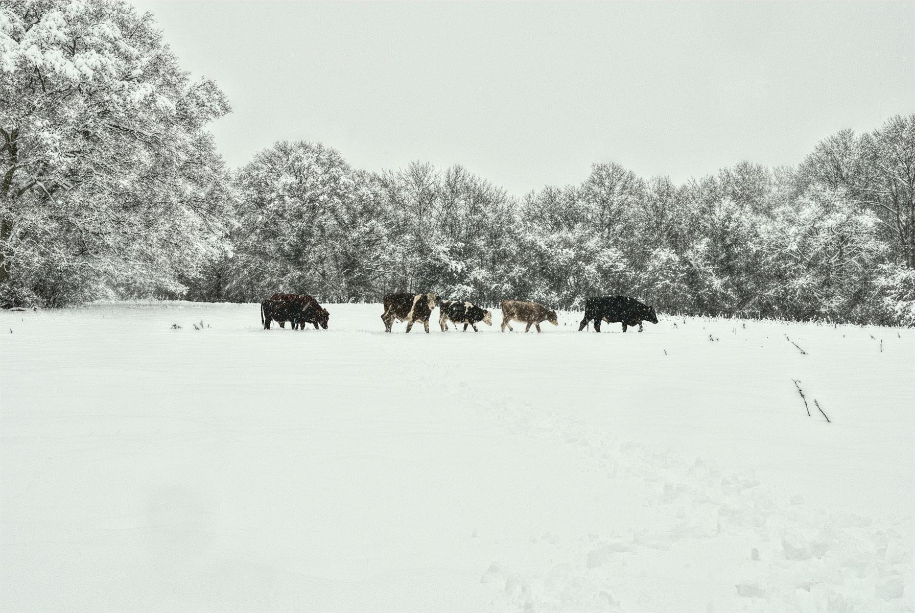 Eastlands in the winter snow